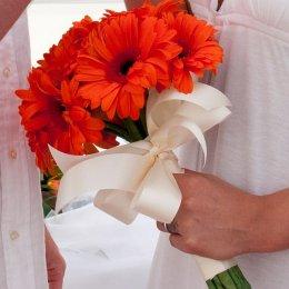 image orange-gerberas-jpg